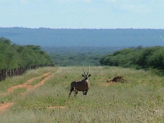 namibia hunting gemsbok 1